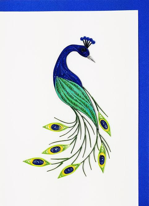 237 Peacock