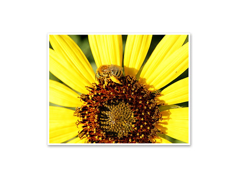 Yellow Sunflower with Bee