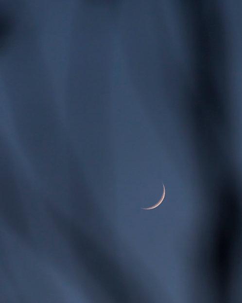 Crescent Moon in Tree