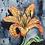 Thumbnail: Tiger Lily