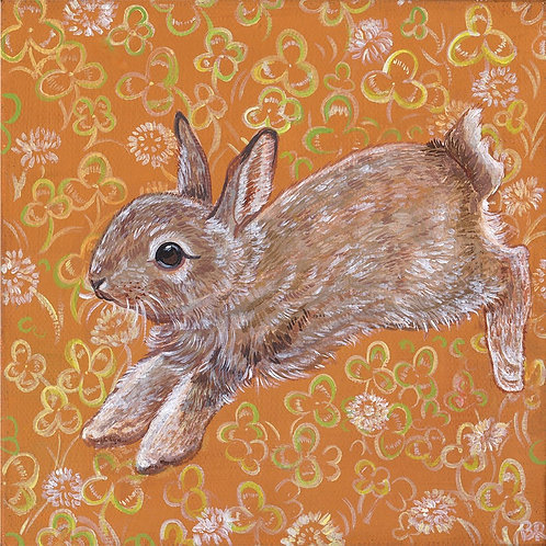 Clover Rabbit