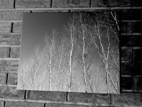 Treeline Canvas