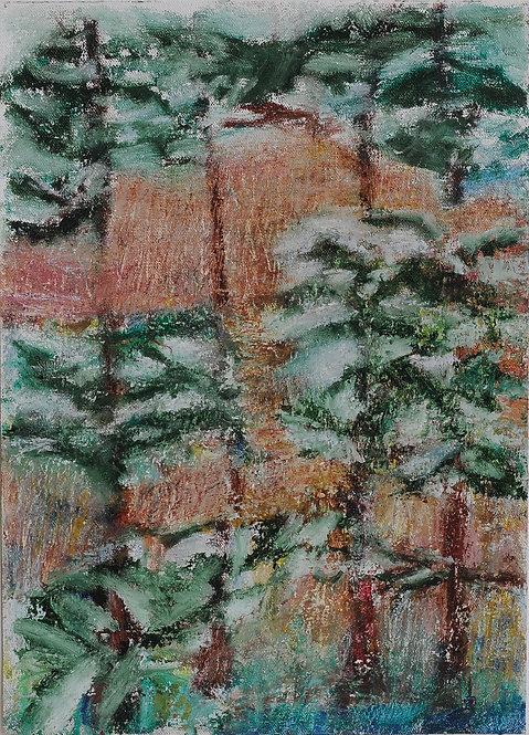 Pine Trees SCSP