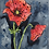 Thumbnail: Red Poppies