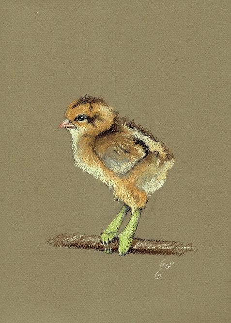 Chickmelion