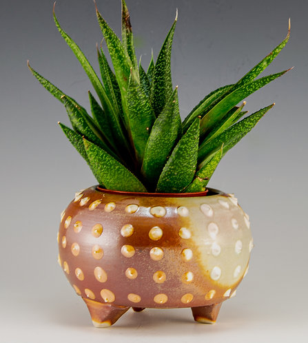 Dotted Planter