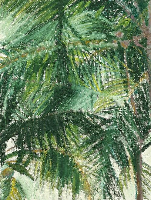 Palms Troncones