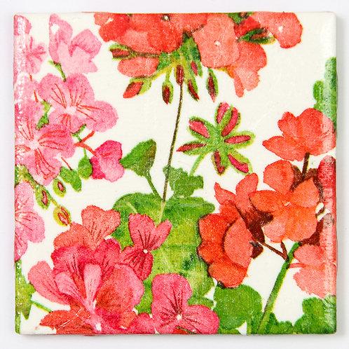 Rose Geraniums:  Set of 4