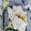 Thumbnail: White Poppies