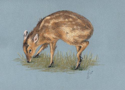 Fancy Deer