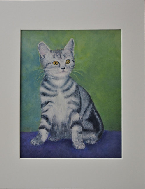 Gray Kitten 2