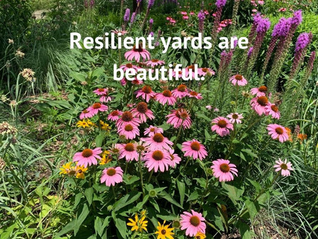 Resilient Yards, Flowering Bee Lawns and Planting for Pollinators