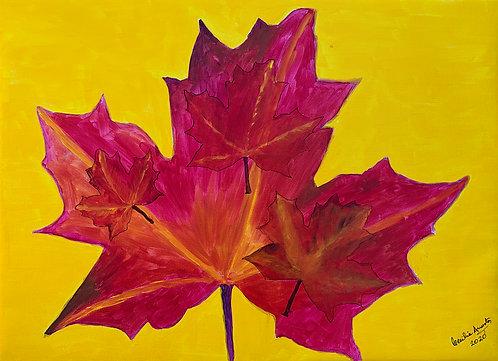 Le foglie d'acero