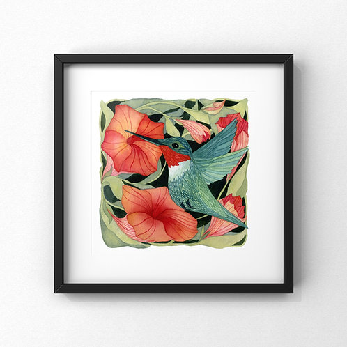 Ruby Throated Hummingbird With Petunias