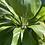 Thumbnail: Tahitian Pearl Drop Earring