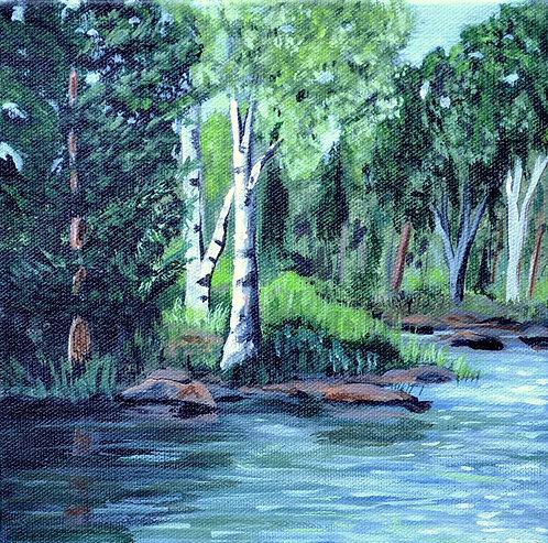 Lakeside Birches