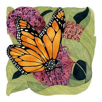 Murrell_Monarch Butterfly_2.jpg