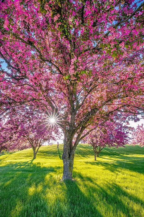 Blissful Spring