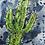 Thumbnail: Prickly Cactus