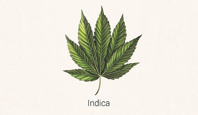 Pure Indica