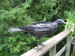 Longstaffe Bird 5