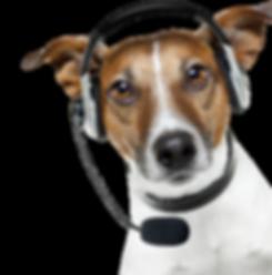 dog-operator-phone.png