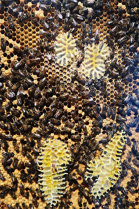 Beehive Cabinet, installation by Anne Noble, Abbaye de Noirlac, France. Photo: Pauline Autet