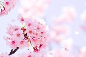 花粉症でお困りの方は住之江区のふじい鍼灸整骨院へご相談ください!!(予約状況)