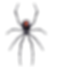 spider transparent.png