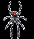 spider transparent.png