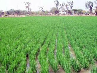 Organic Zero-till Farming