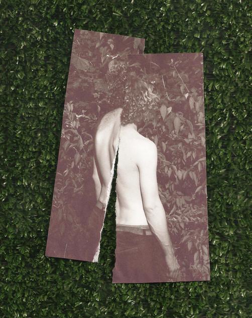 Untitled [Grass]