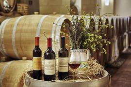 Wedding in Winery in Sicily