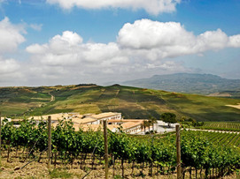 Wedding in wineyard in Sicily_Stemmari.j
