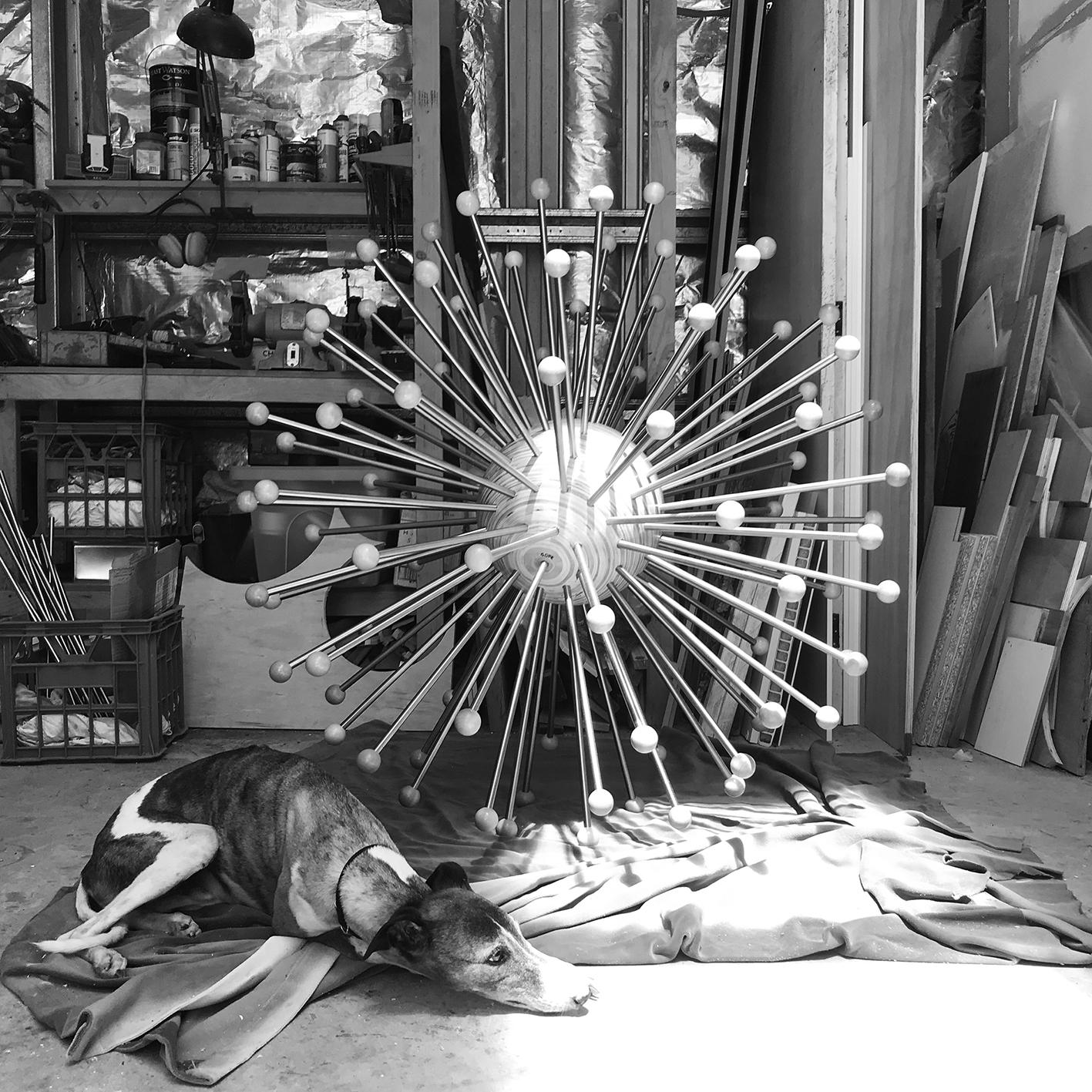 Studio dog with Globulous
