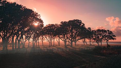 misty tree.jpg