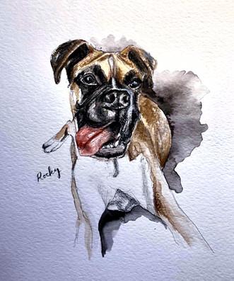 Colour Portrait of Rocky