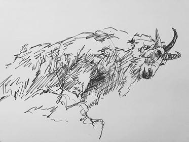 Mountain Goat on Mountain