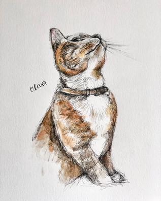 Colour Portrait of Oliver