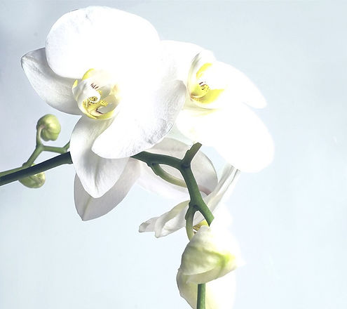 Orchid_edited_edited.jpg