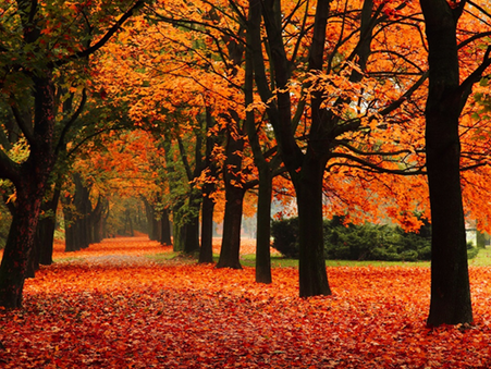 LOOKING FORWARD TO AUTUMN