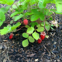 The Livingston Manor Community Food Forest