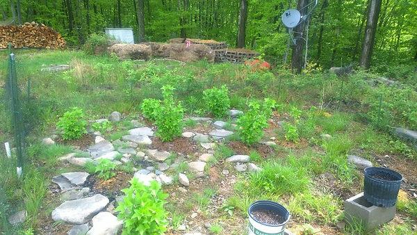 Haven's Grow Lab (Outdoor Gardens)