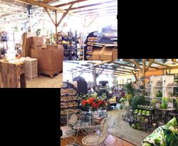 Boutique Jardinerie Avant-Après