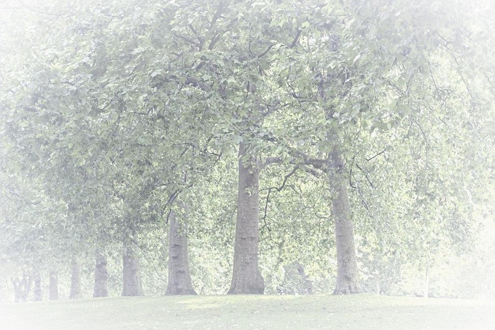 Park%2520Trees_edited_edited.jpg