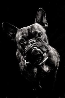 chien portrait studio