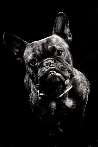 fjf chien studio.jpg