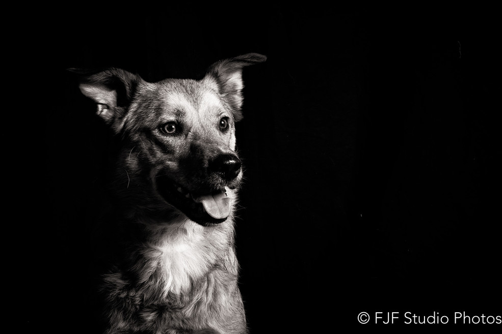 chien studio