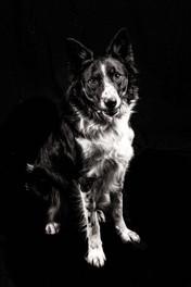 fjf chien studio nb--3.jpg