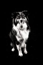 fjf chien studio nb-.jpg